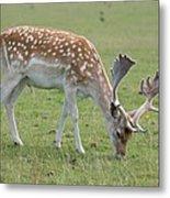 Deer Eating Metal Print