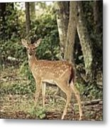 Deer Friend Metal Print