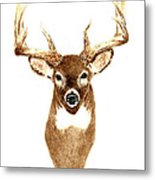 Deer - Front View Metal Print
