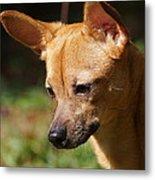 Deer-head Chihuahua Metal Print