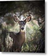 Deer I Metal Print