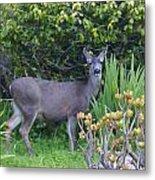 Deer II Metal Print