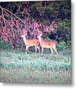 Deer-img-0151-003 Metal Print