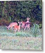 Deer-img-0156-002 Metal Print