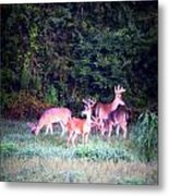 Deer-img-0158-003 Metal Print