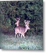 Deer-img-0177-001 Metal Print
