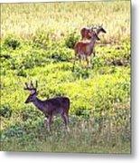 Deer - 0437-004 Metal Print