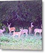 Deer-img-0470-002 Metal Print