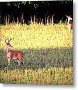 Deer-img-0627-001 Metal Print