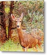 Deer In Forest Metal Print