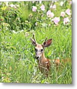 Deer In Magee Marsh Metal Print