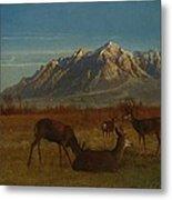 Deer In Mountain Home Metal Print