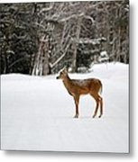 Deer In Road Metal Print