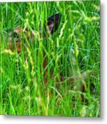 Deer In Tall Grass Metal Print