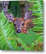 Fawn In The Ferns Metal Print