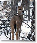 Deer In The Grove Metal Print