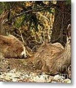 Deer In The Rockies Metal Print