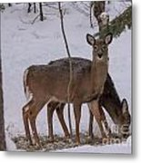 Deer In The Trees Metal Print