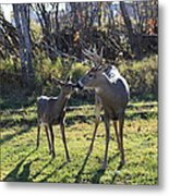 Deer Kiss Metal Print