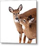 Deer Kisses Metal Print