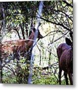 Deer Looking For Food Metal Print