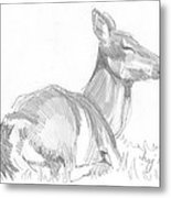 Deer Lying Down Drawing Metal Print