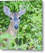 Deer Me Metal Print by Joe McCormack Jr