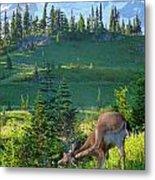 Deer Mountain Metal Print