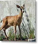 Deer On A Walkabout Metal Print