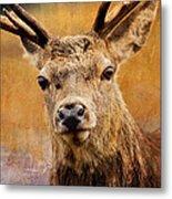 Deer On Canvas Metal Print