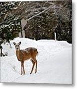 Deer On Side Of Road Metal Print