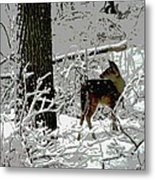 Deer On Snowy Trail Metal Print