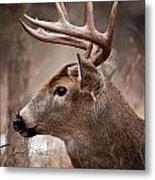 Deer Pictures 491 Metal Print
