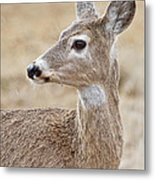 White Tail Deer Profile Metal Print