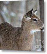 Deer Profile Metal Print