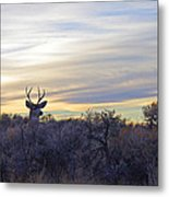 Deer Ridge - Sunset Buck Metal Print