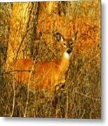 Deer Spotted In A Golden Glowing Field  Metal Print