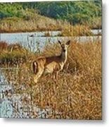 Deer The Point Hatteras Nc 2 12/5 Metal Print