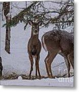 Deer With A Leg Up Metal Print