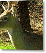 Deer4 2009 Metal Print