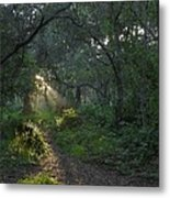 Del Monte Forest Pacific Grove Ca Metal Print by Elery Oxford
