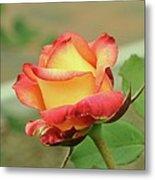Delaney Sisters Grandiflora Rose 2 Metal Print