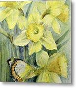 Delias Mysis Union Jack Butterfly On Daffodils Metal Print