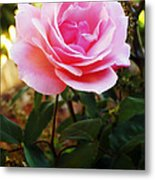 Delicacy Of Life Metal Print