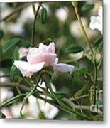 Delicate As A Rose Metal Print