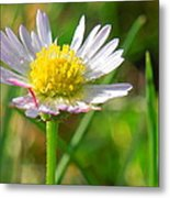 Delicate Daisy In The Wild Metal Print