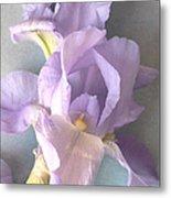 Delicate Dance Of The Iris Flower Metal Print
