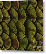 Delicate Feather Metal Print