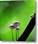 Delicate Mushrooms Metal Print