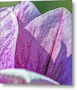 Delicate Nature Metal Print